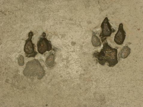 Foto de Estampas De Tigre e mais fotos de stock de Animal