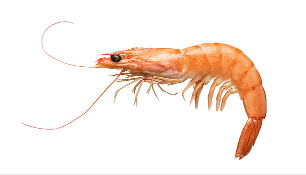 Tiger shrimp isolated on white stock photo
