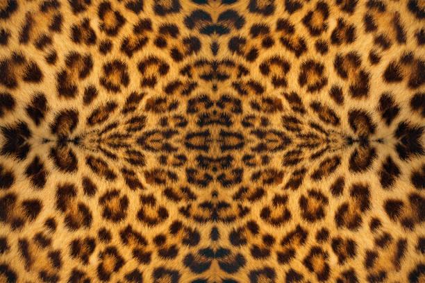 Piel de tigre - foto de stock