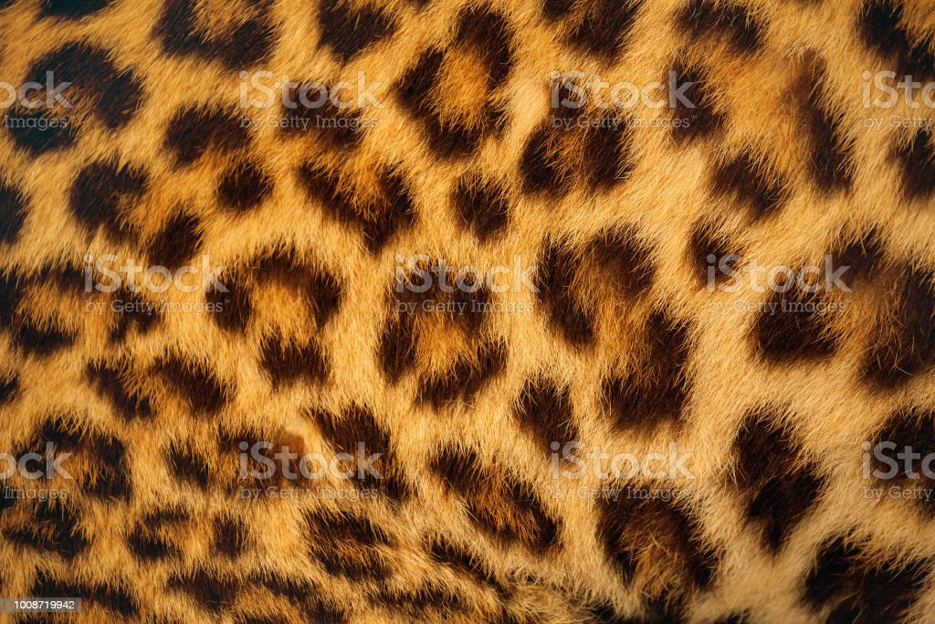 Tiger skin. stock photo