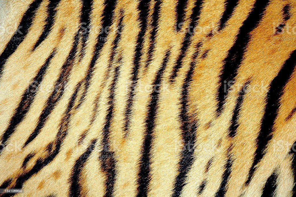 tiger skin stock photo