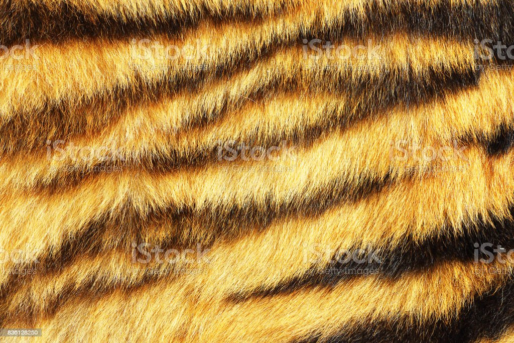tiger stripes on real animal leather stock photo