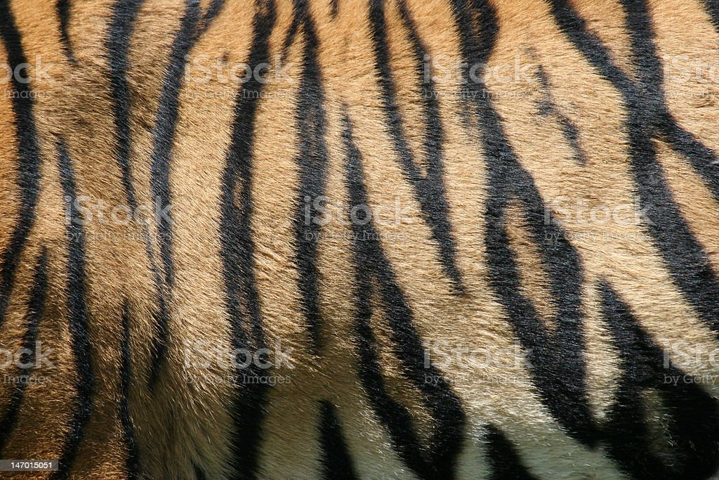 Tiger stripes stock photo
