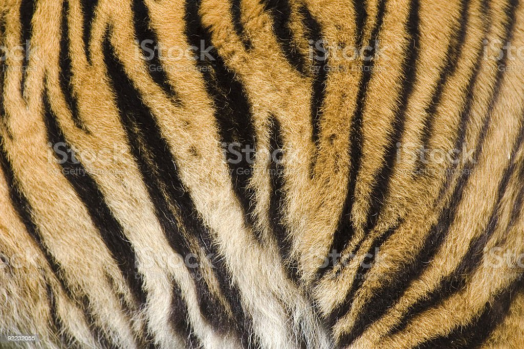 Tiger stripes stock photo