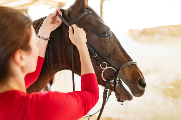 tightening reins before horseback riding - horse bit stock photos and pictures