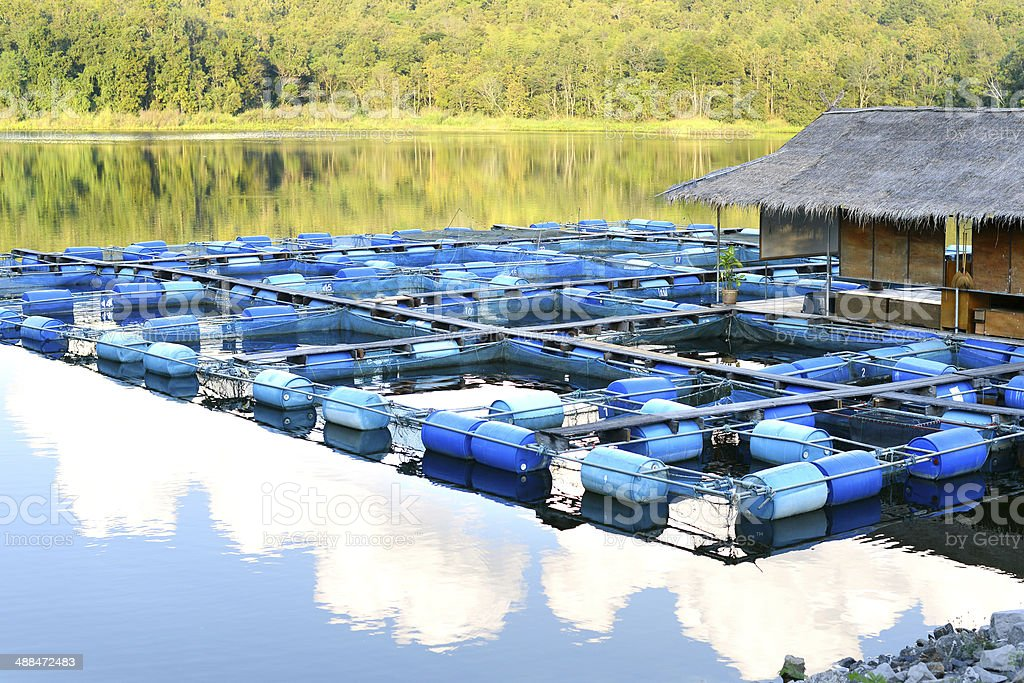aquaculture in thailand Being fanatic about fish since childhood, having an msc in aquaculture from  stirling university, scotland and an ability to speak the thai language (having.