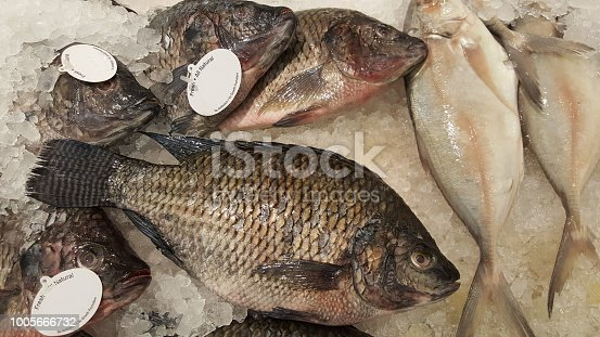 istock Tilapia fish on ice for sale. Retail display. Fish gills, eyes and fins 1005666732