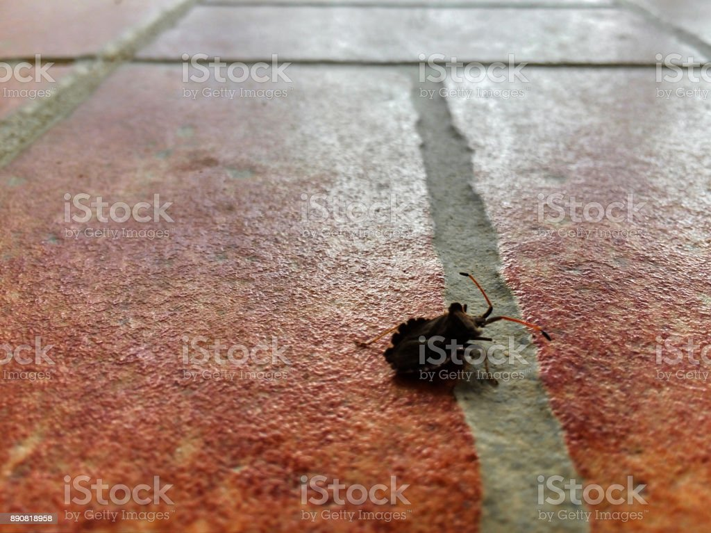 Tiled floor and a bug passing by stock photo