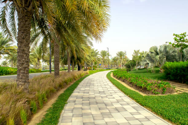 Tiled sidewalk among the road with green palms stock photo