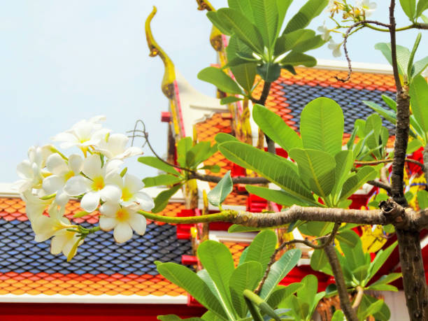 Tiled temple rooftop and flowers stock photo