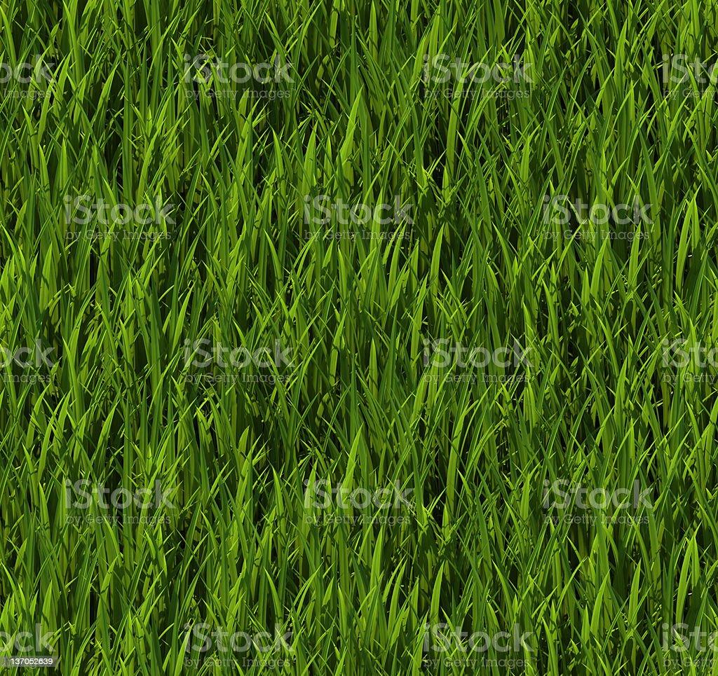 Tiling texture – Grass stock photo