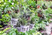 Tillandsia plant holding