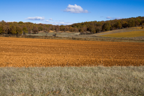 Tilled Field and Oak Forest - Paisaje Campo  Bosque  Robles