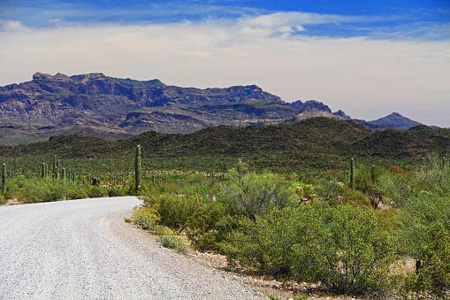 istock Tillotson Peak in Organ Pipe Cactus National Monument 807168634