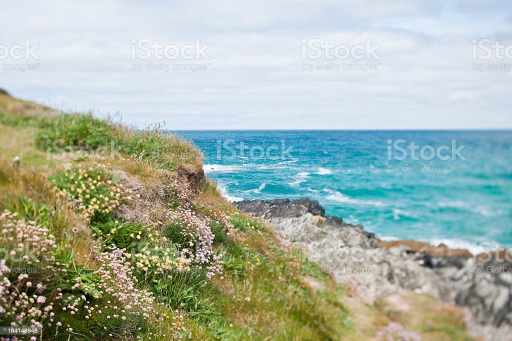 Tilt and Shift Wild Flowers on the Cornish Clifftops stock photo