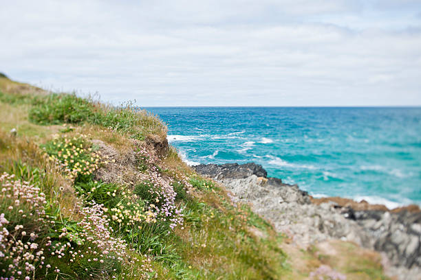 tilt and shift wild flowers on the cornish clifftops - cornwall stock photos and pictures