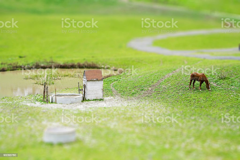 Tilt Shift Horse Grazing stock photo