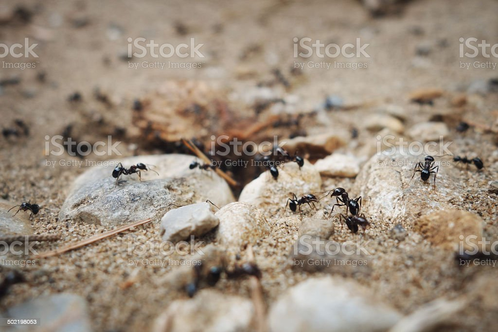 Tilt shift of the ant's nest. stock photo