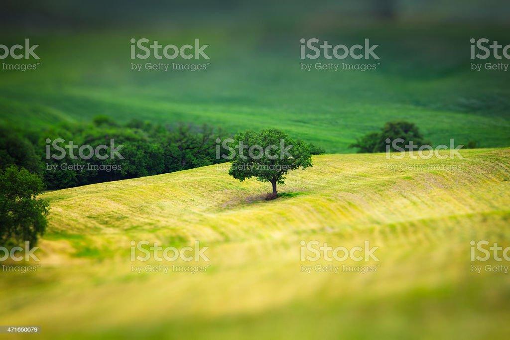 Tilt Shift photo with tree stock photo
