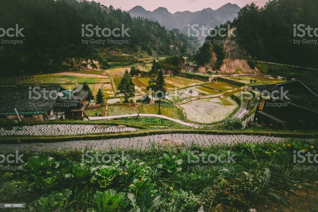 Tilt shift shooting of rice fields in Vietnam foto stock royalty-free