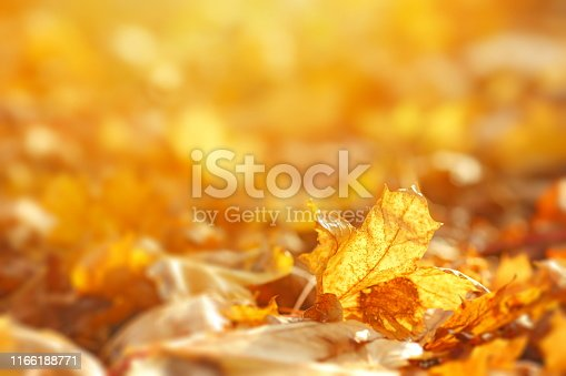 Falling autumn leaves natural background.