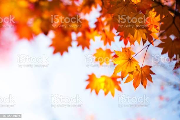 Photo of Tilt-Shift Image Of Autumn Orange Leaves