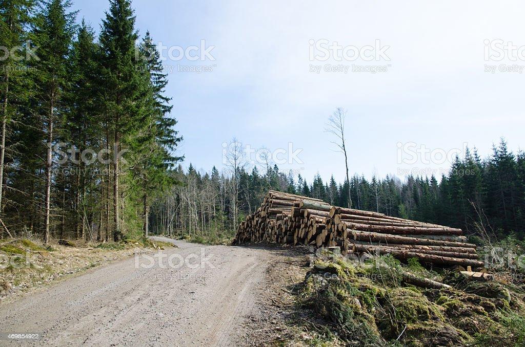 Timber at roadside stock photo