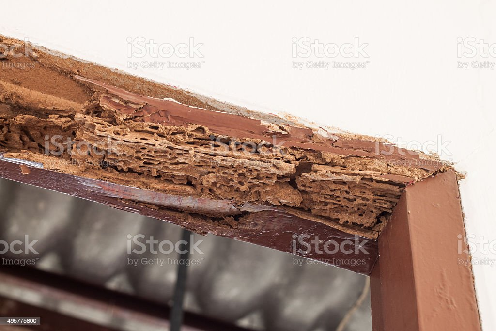 Timber beam of door damaged by termite stock photo
