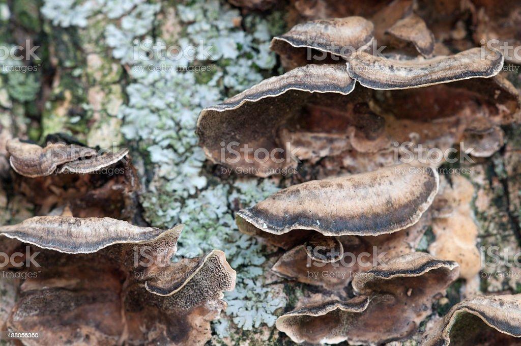 Timber fungus stock photo