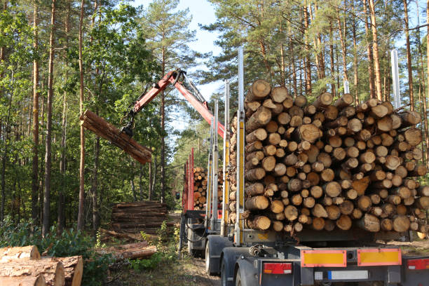 timber harvesting and transportation in forest. - industria forestale foto e immagini stock