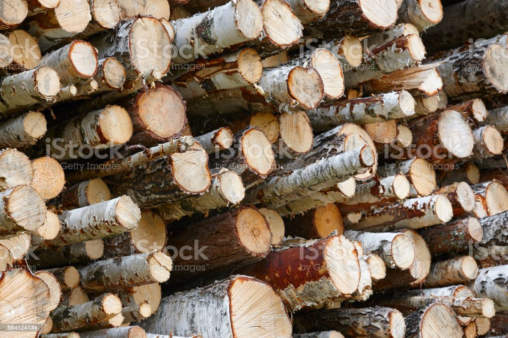 Timber industry in Finland. Stacked birch trees. Nature background royalty-free stock photo
