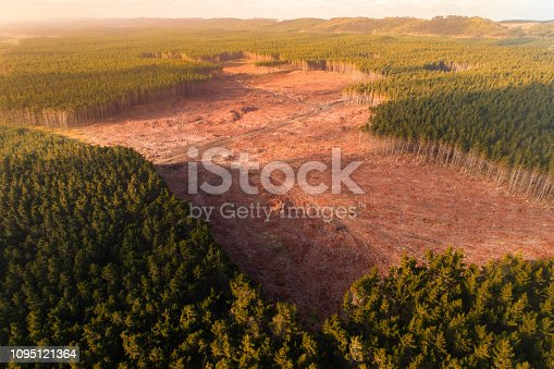 Aerial view of timber industry in New Zealand.