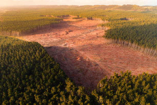Timber industry. Aerial view of timber industry in New Zealand. deforestation stock pictures, royalty-free photos & images