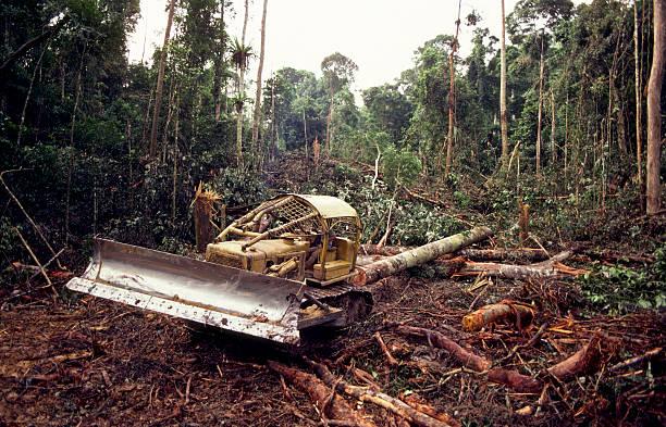 sector maderera - deforestacion fotografías e imágenes de stock