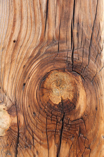 Timber Knot stock photo