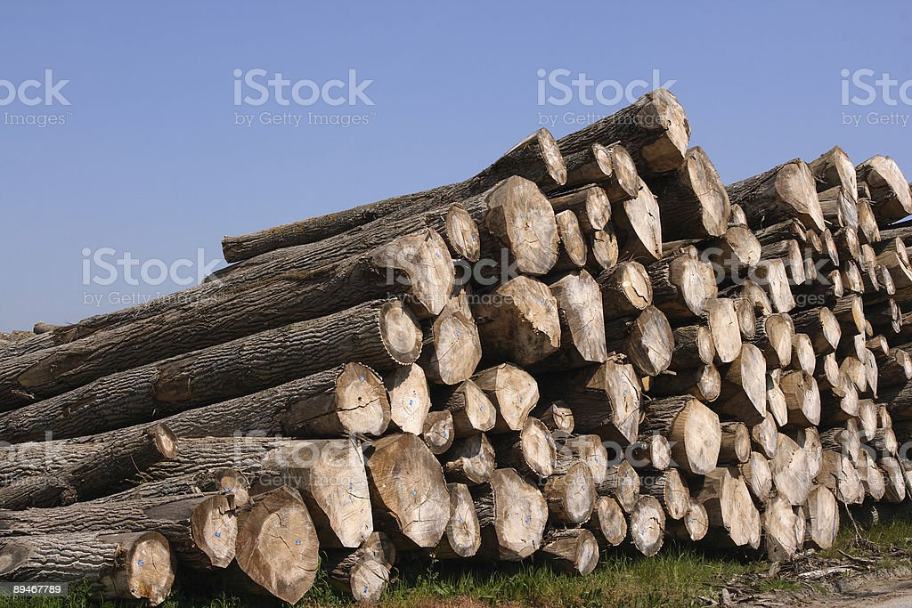 Timber pile royalty-free stock photo