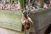 istock Timber Retaining Wall Damaged By Bamboo 1277918025