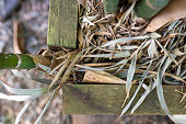istock Timber Retaining Wall Damaged By Bamboo 1277918045
