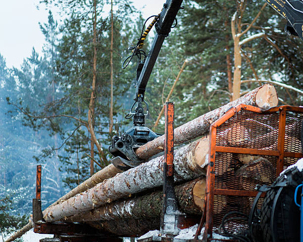timber truck just finished loading - logging equipment stock photos and pictures