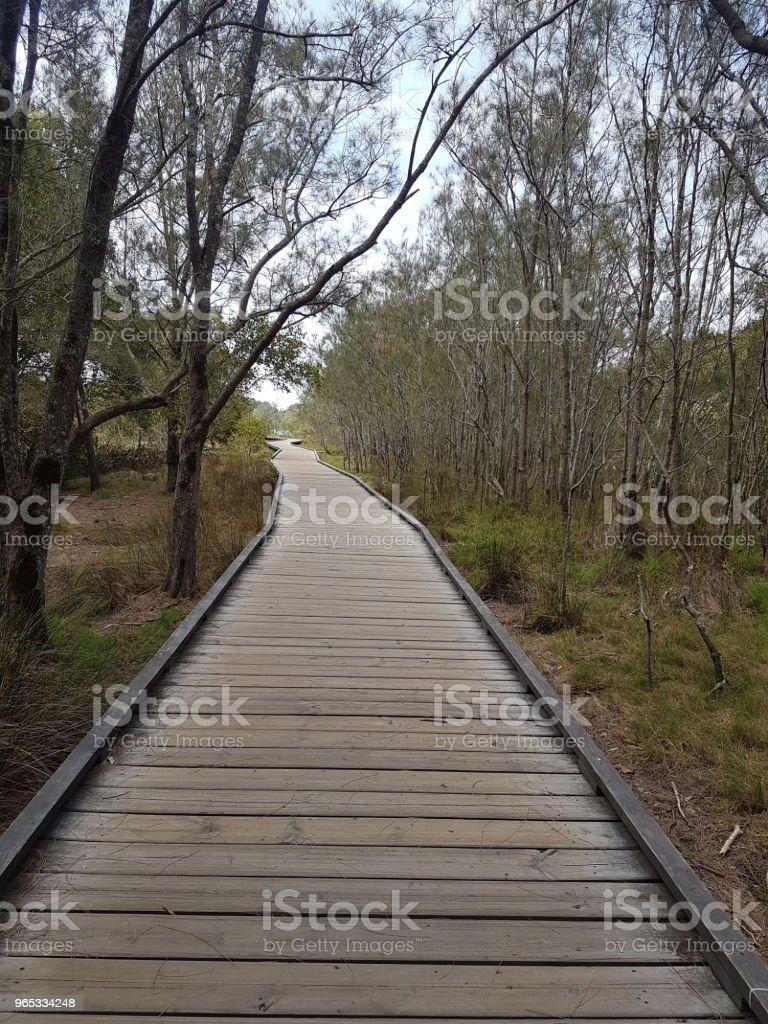 Timber walkway through tidal area zbiór zdjęć royalty-free