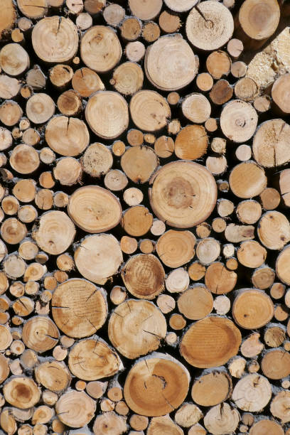 Timber - Wood Sawn Wood - Lumber Industry log stock pictures, royalty-free photos & images