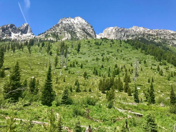 Timberline in Grand Teton National Park stock photo