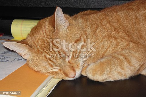 Closeup of an Orange Tabby, taking a nap on a black computer desk.  Taken with a Nikon D3500
