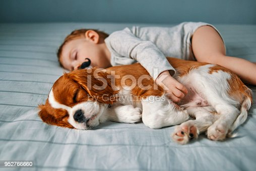 942206906 istock photo time for a power nap 952766660