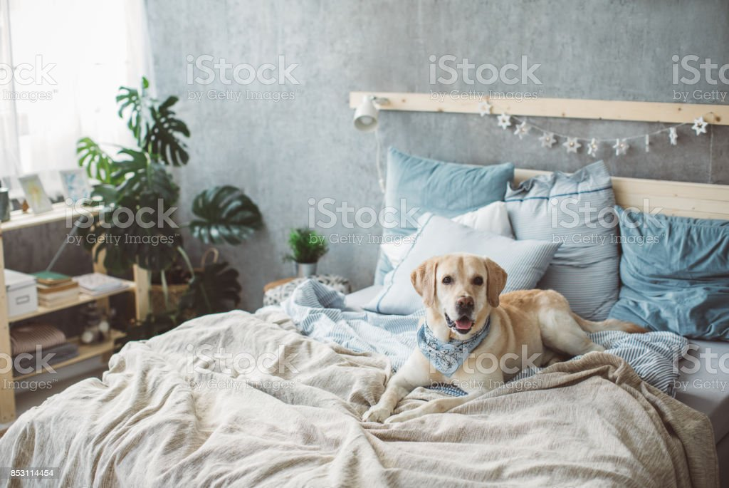 Time for nap stock photo
