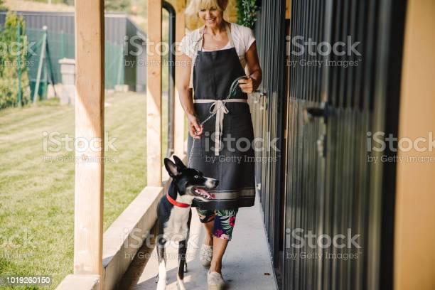 Time for walking at doggie daycare picture id1019260150?b=1&k=6&m=1019260150&s=612x612&h=saayg8tvyjxcj3oey42pk1xjzuyyqkh hgra3xgsfg4=