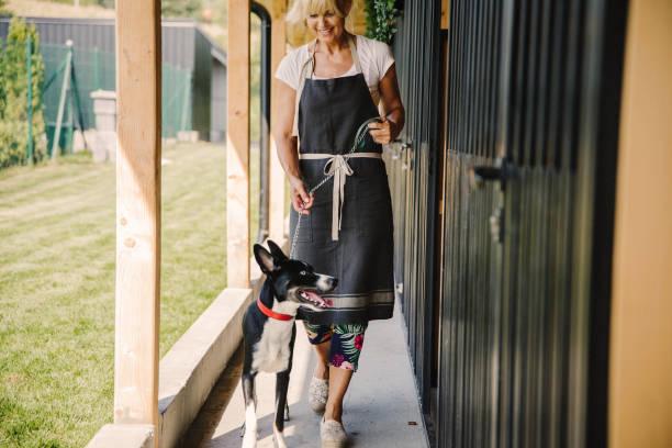 time for walking at doggie daycare - allevatore foto e immagini stock
