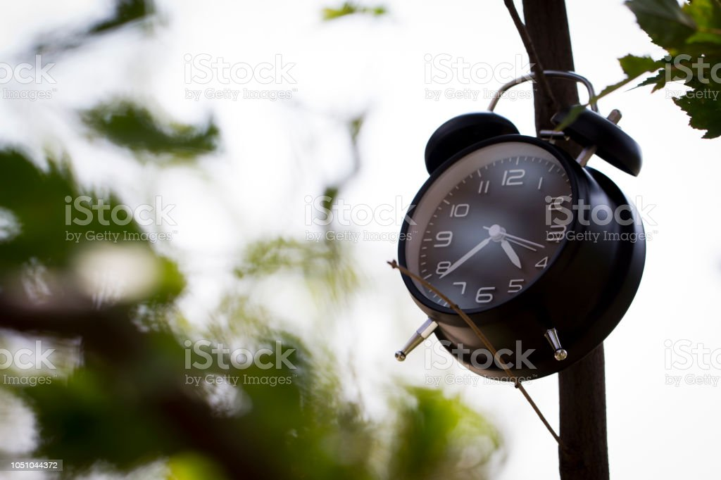Representing the importance of time, time can bring wealth and money,...