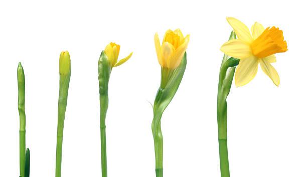 Der Frühling kommt – Foto