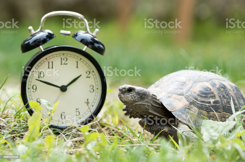 Time Management Concept With Alarm Clock And A Turtle stock photo